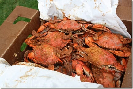 IMG 8223 thumb Crabs