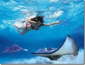 Cayman-Islands-Stingray-City (1)