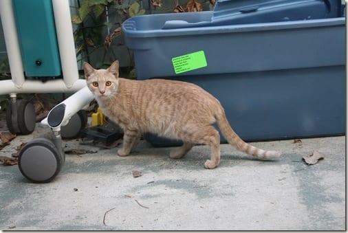 stranger cat