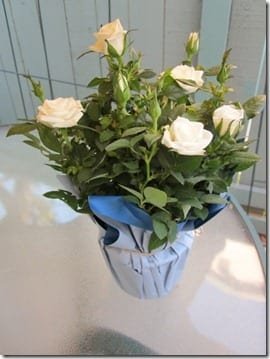 TJ's flowers