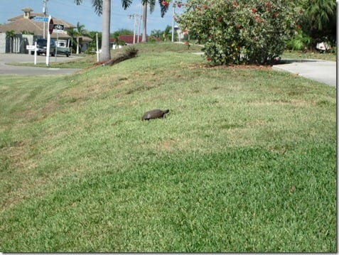turtle in Florida
