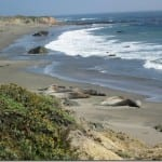 elephant-seals-california.jpg