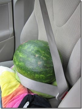 watermelon in a seatbelt