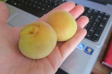 Ask a Monican for Organic Apricots