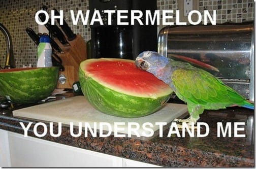 watermelon understands me