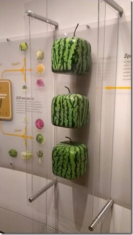 square watermelons in a museum