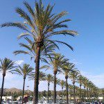 palm-trees-in-orange-county-800x450-800x450.jpg