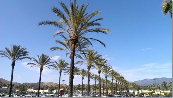 palm trees in orange county 800x450 800x450 thumb Summer Running Must Haves