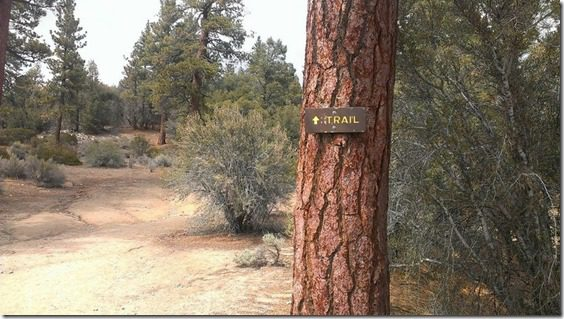trail in big bear (800x450)