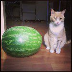 watermelon-and-a-cat-800x800.jpg