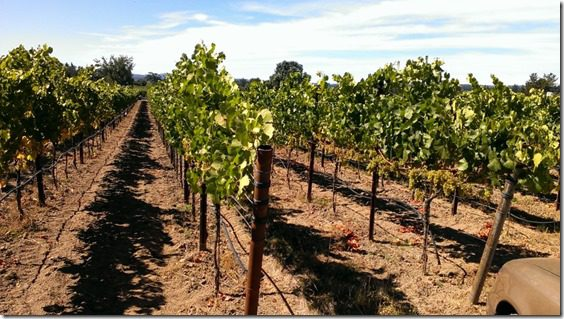 a day in wine country (800x450)