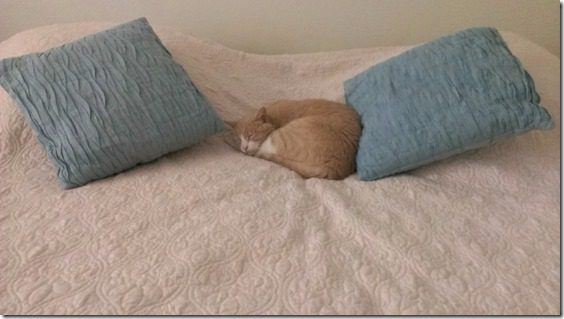 sleepy cat (800x450)