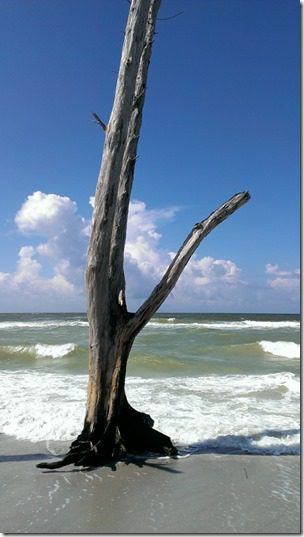beautiful beach tree (450x800)
