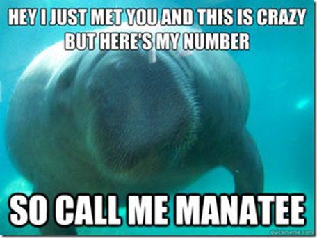 call me manatee