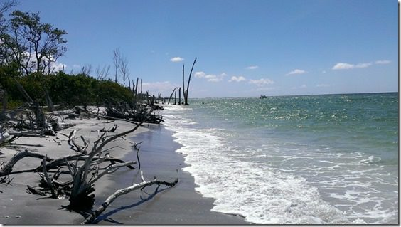 florida beach with drift wood 800x450 thumb That Time I Saw a Manatee and fell in Love