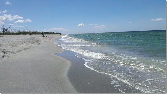 florida beach with trees