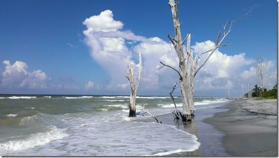 florida trees on the baech (800x450)