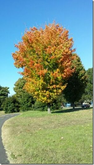 fall trees (230x408)