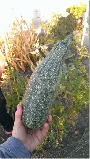 huge zucchini from garden (450x800)
