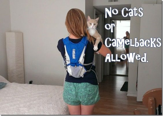 no cats or camelbacks at races