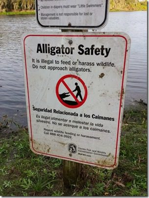 alligator safety (376x501)