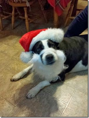 dog clause 376x501 thumb Santa Dog and 25 Days of Fitness Day 23