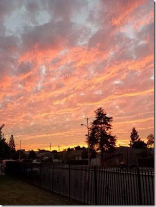 pink skies (376x501)