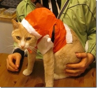 santa cat thumb Throwback Thursday Christmas Edition