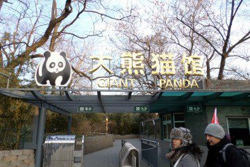 China Pandas and the Olympic Stadium