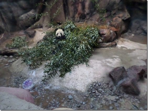 i love you panda food blogger post from china zoo