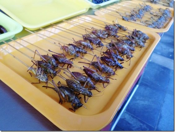 eating crickets in china food blog