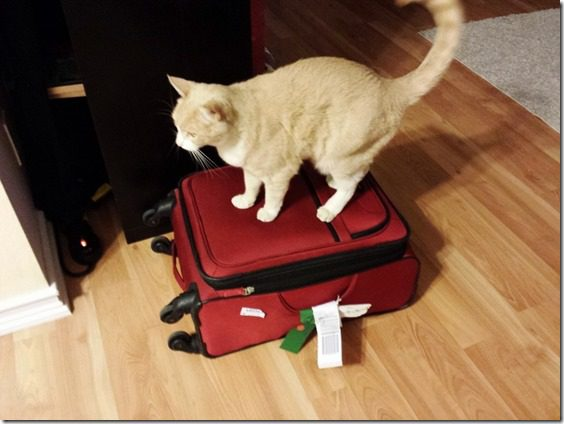 cat on my suitcase (800x600)