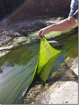 algae on a walk (600x800)
