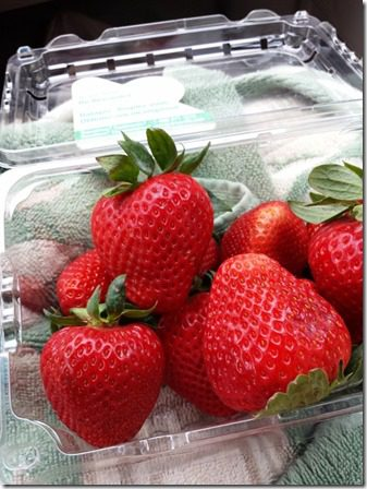 ca strawberries (600x800)