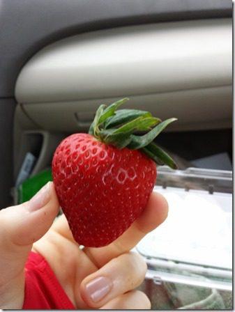ca strawberries in the car (600x800)