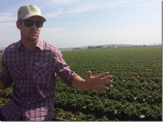 california strawberry farm visit blog 1 (800x600)
