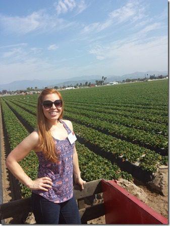california strawberry farm visit hayride (600x800)