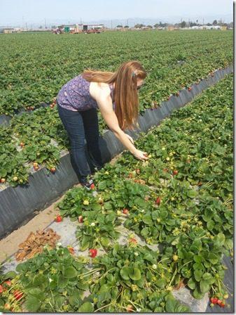 strawberry farm terry berry tour 4 (600x800)