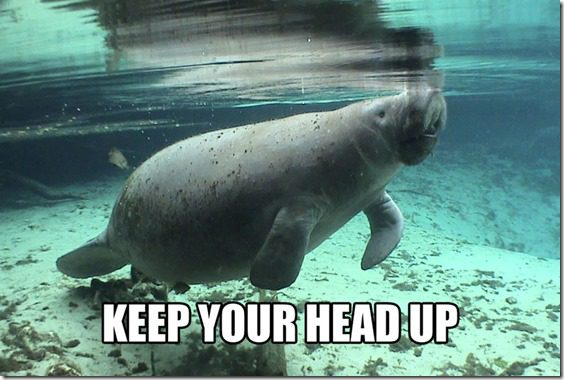 calming manatee keep your head up