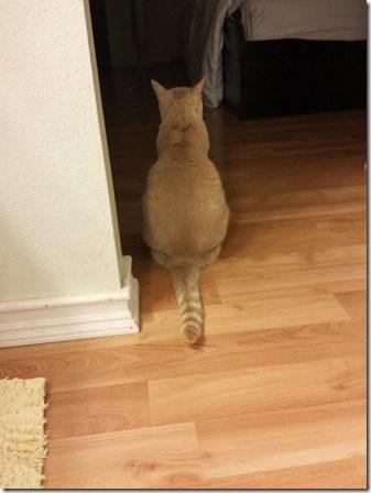 cat butt (600x800)
