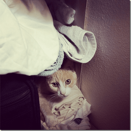 cat in the closet