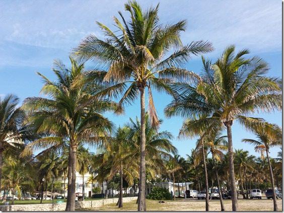 palm trees in miami (800x600)