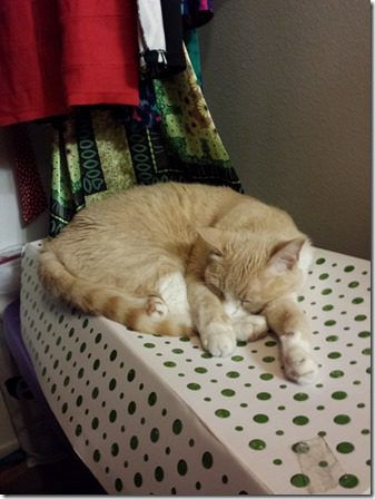 cat in the closet (600x800)