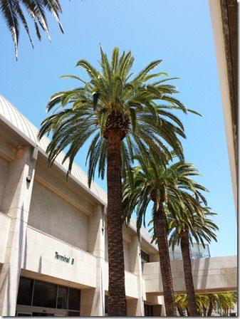 palm trees back home (600x800)