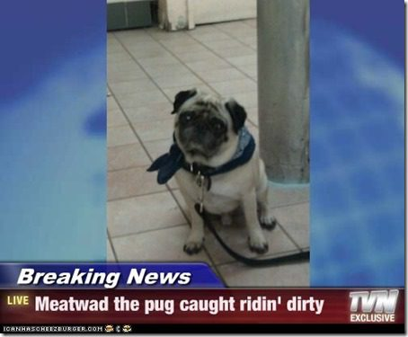 pug caught riding dirty