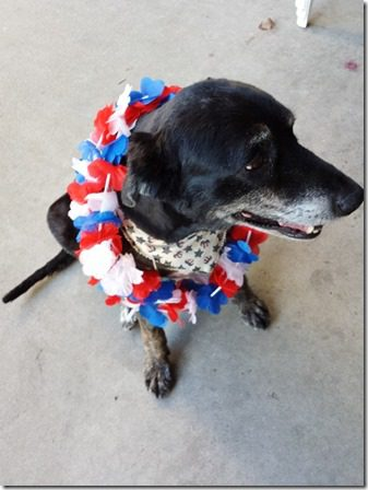 fourth of july dog (600x800)