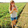 sabra salsa tomato farm