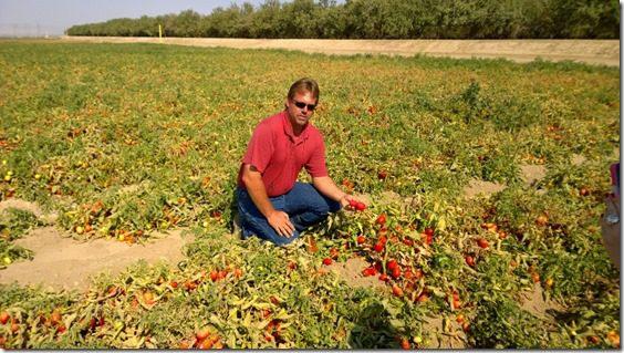 WP 20140731 09 54 44 Pro 800x450 thumb Sabra Salsa Love Touring a Tomato Farm