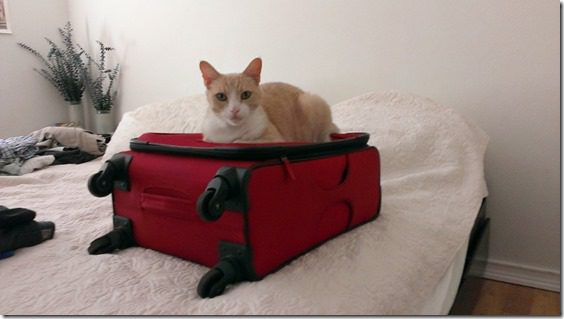 cat on suitcase (800x450)