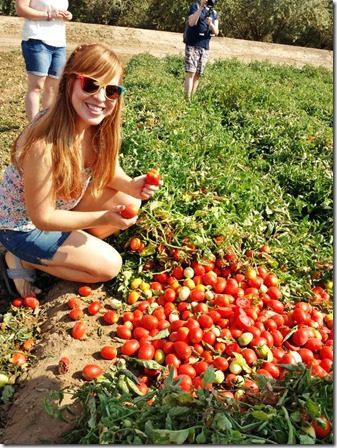 im a farmer 600x800 thumb Sabra Salsa Love Touring a Tomato Farm